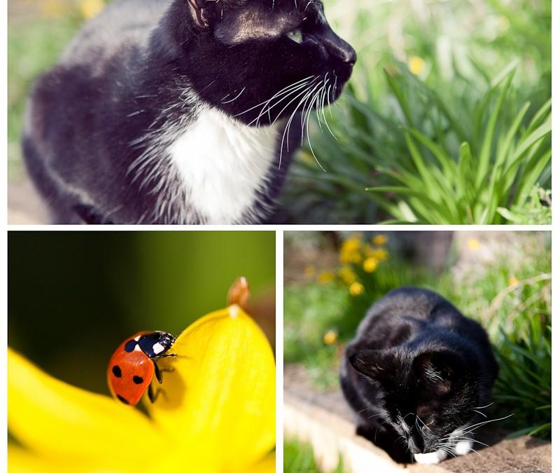 Spring has officially sprung in our garden…
